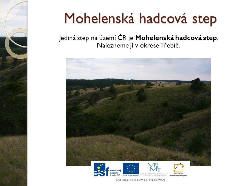 Mohelenská hadcová step Jediná step na území ČR je Mohelenská hadcová step. Nalezneme ji v okrese Třebíč.
