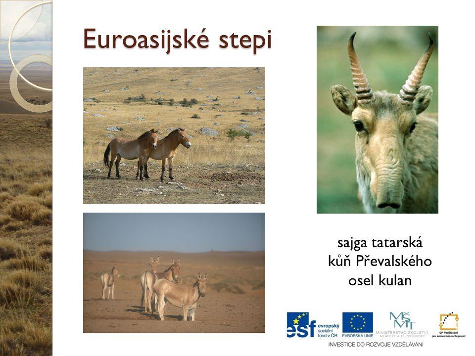 Euroasijské stepi sajga tatarská kůň Převalského osel kulan