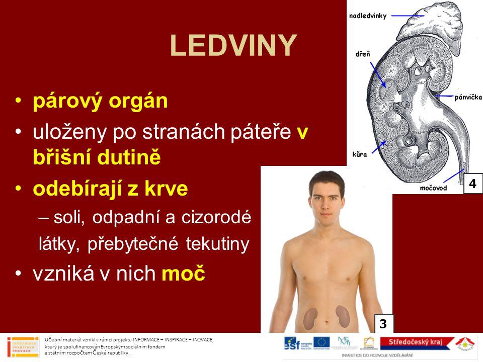 LEDVINY párový orgán uloženy po stranách páteře v břišní dutině odebírají z krve –soli, odpadní a cizorodé látky, přebytečné tekutiny vzniká v nich mo