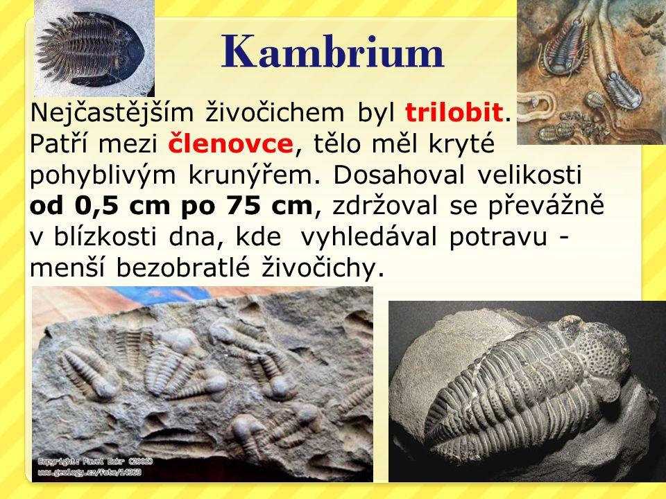 Kambrium Nejčastějším živočichem byl trilobit.