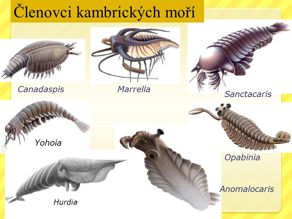 Anomalocaris Canadaspis Marrella Sanctacaris Opabinia Členovci kambrických moří Yohoia Hurdia