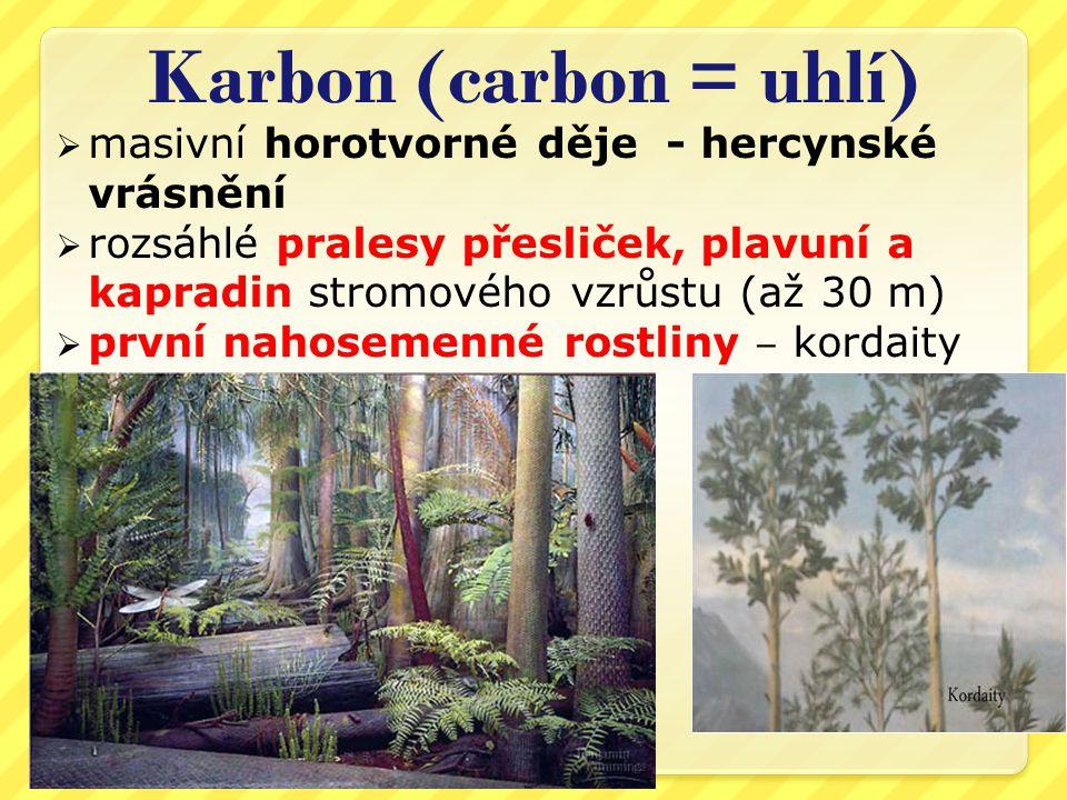 Karbon (carbon = uhlí)  masivní horotvorné děje - hercynské vrásnění  rozsáhlé pralesy přesliček, plavuní a kapradin stromového vzrůstu (až 30 m)  první nahosemenné rostliny ‒ kordaity