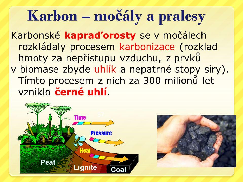 Karbon – mo č ály a pralesy Karbonské kapraďorosty se v močálech rozkládaly procesem karbonizace (rozklad hmoty za nepřístupu vzduchu, z prvků v biomase zbyde uhlík a nepatrné stopy síry).
