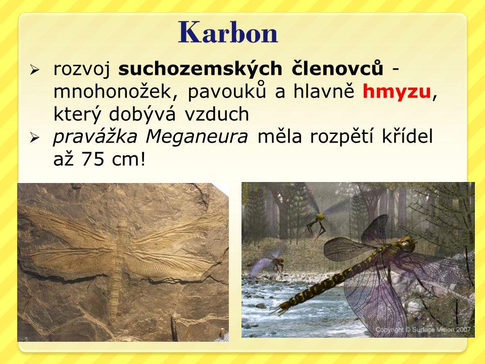 Karbon  rozvoj suchozemských členovců - mnohonožek, pavouků a hlavně hmyzu, který dobývá vzduch  pravážka Meganeura měla rozpětí křídel až 75 cm!