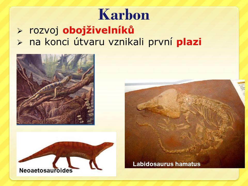 Karbon  rozvoj obojživelníků  na konci útvaru vznikali první plazi Labidosaurus hamatus Neoaetosauroides