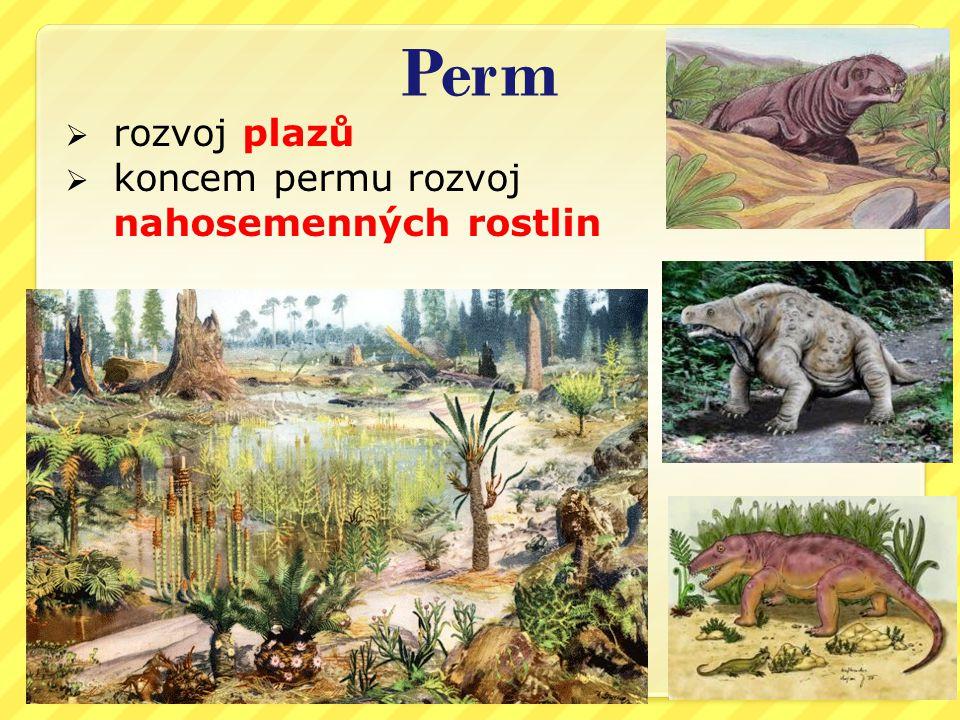 Perm  rozvoj plazů  koncem permu rozvoj nahosemenných rostlin