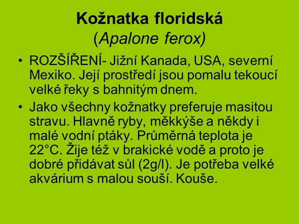 Kožnatka floridská (Apalone ferox) ROZŠÍŘENÍ- Jižní Kanada, USA, severní Mexiko.