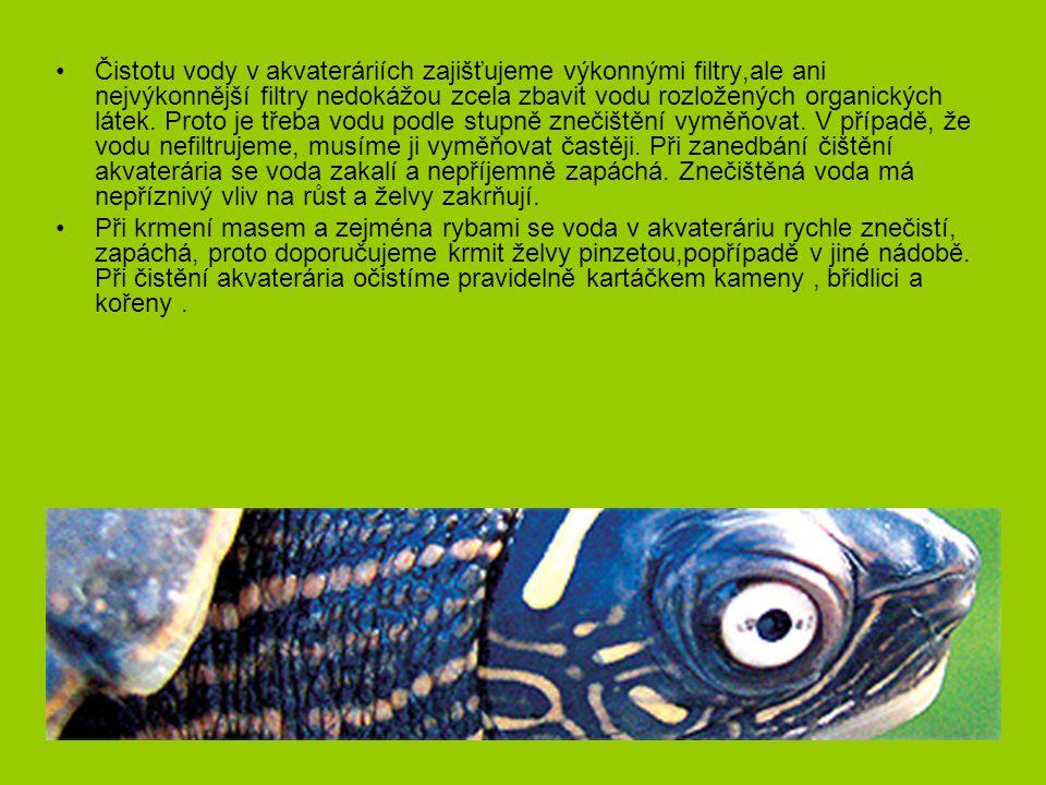 Akvaterárium pro vodní želvy