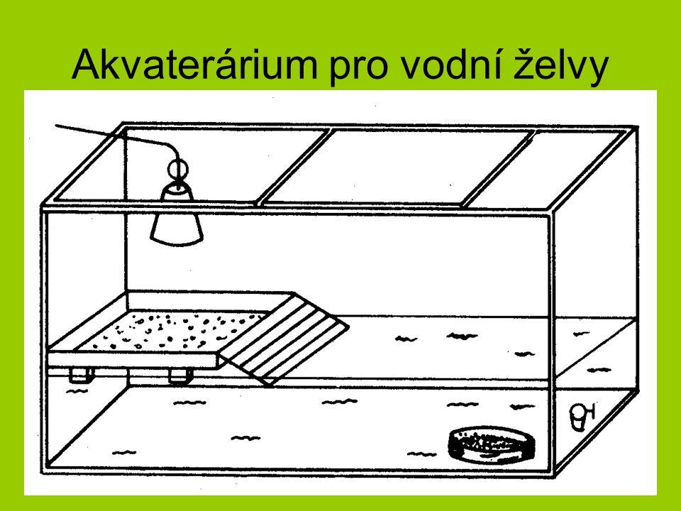 Kvalitní prostředí pro vodní želvy Proč je nutné dávat želvám do akvária odstátou vodu.