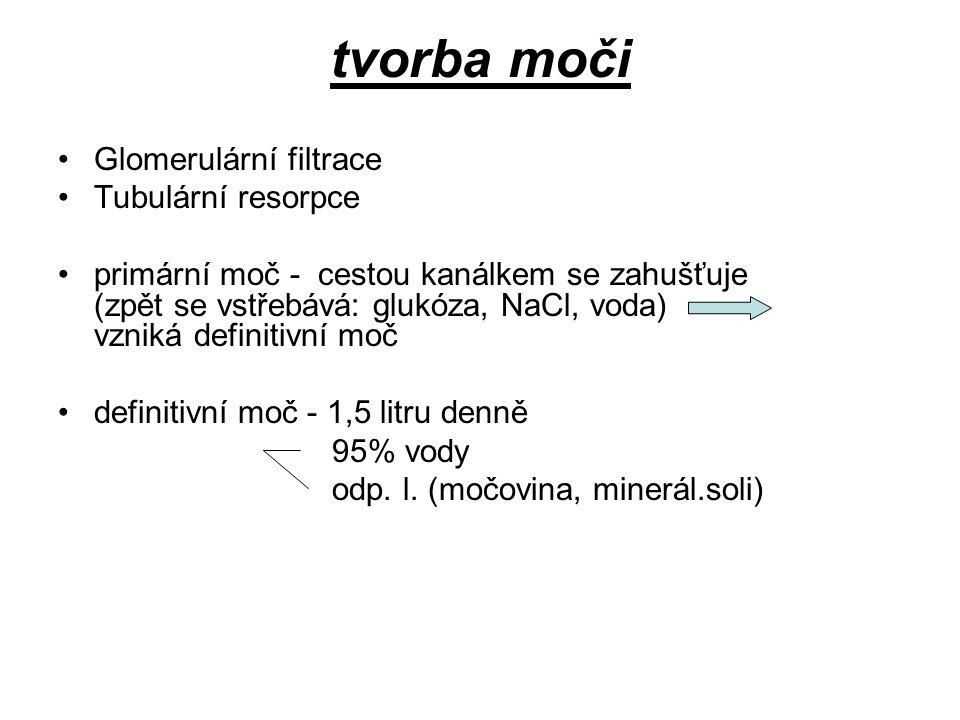 tvorba moči Glomerulární filtrace Tubulární resorpce primární moč - cestou kanálkem se zahušťuje (zpět se vstřebává: glukóza, NaCl, voda) vzniká defin