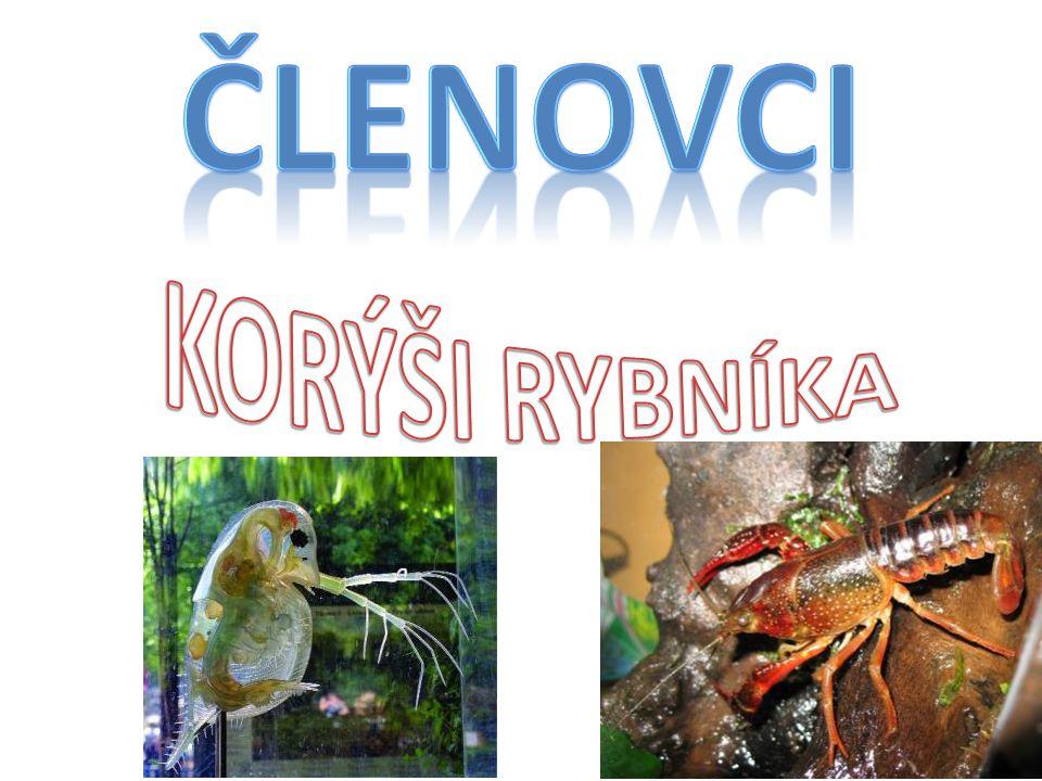 BEZOBRATLÍ ŽIVOČICHOVÉ S ČLENĚNÝM TĚLEM A ČLÁNKOVANÝMI KONČETINAMI např. korýši, pavoukovci, hmyz