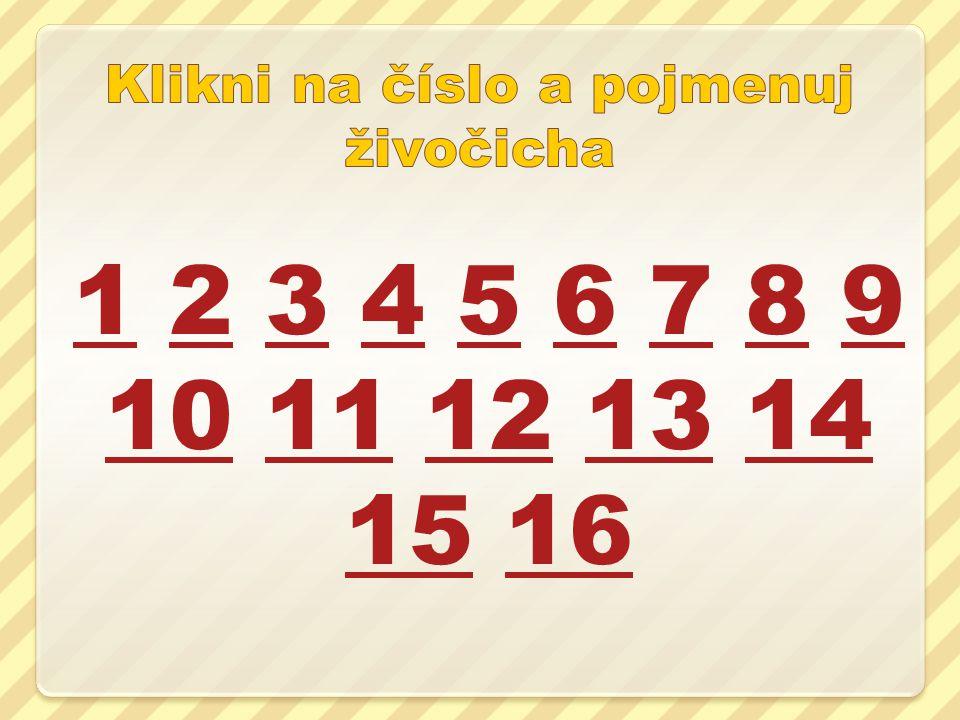 11 2 3 4 5 6 7 8 9 10 11 12 13 14 15 1623456789 1011121314 1516