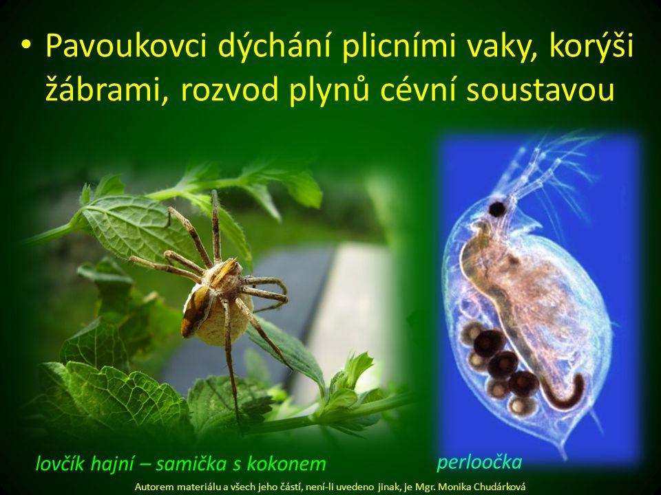 Pavoukovci dýchání plicními vaky, korýši žábrami, rozvod plynů cévní soustavou Autorem materiálu a všech jeho částí, není-li uvedeno jinak, je Mgr.