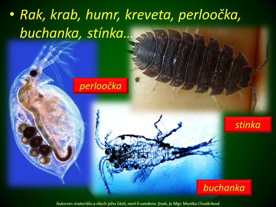 Rak, krab, humr, kreveta, perloočka, buchanka, stínka… Autorem materiálu a všech jeho částí, není-li uvedeno jinak, je Mgr.