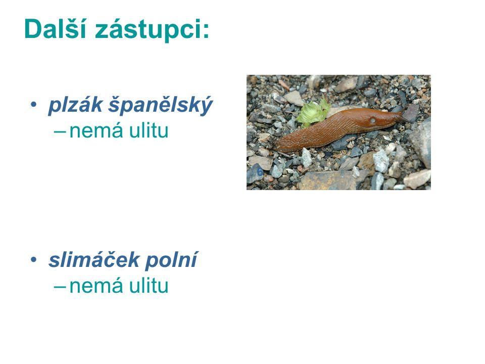 plzák španělský –nemá ulitu slimáček polní –nemá ulitu 6 Další zástupci: