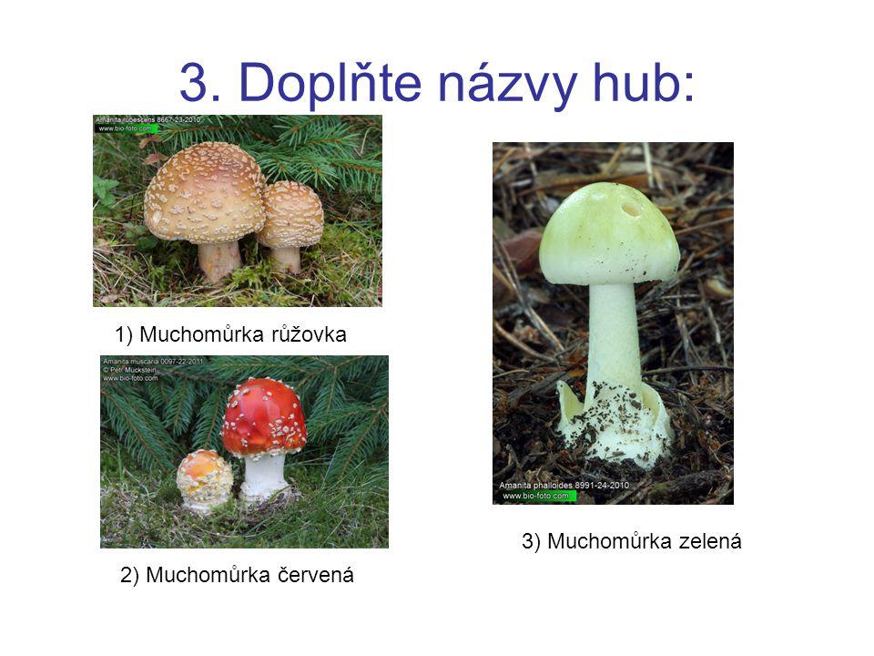 3. Doplňte názvy hub: 1) Muchomůrka růžovka 2) Muchomůrka červená 3) Muchomůrka zelená