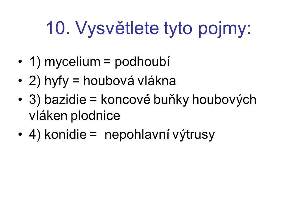 10. Vysvětlete tyto pojmy: 1) mycelium = podhoubí 2) hyfy = houbová vlákna 3) bazidie = koncové buňky houbových vláken plodnice 4) konidie = nepohlavn