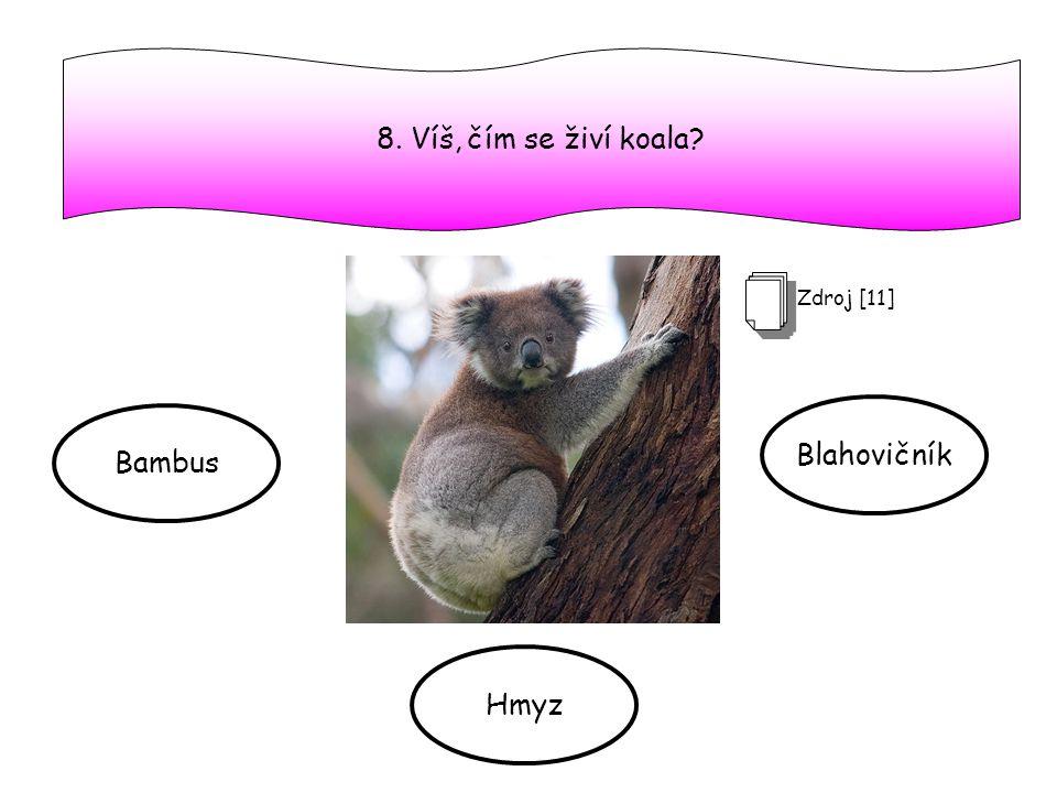 8. Víš, čím se živí koala? Bambus Hmyz Blahovičník Zdroj [11]