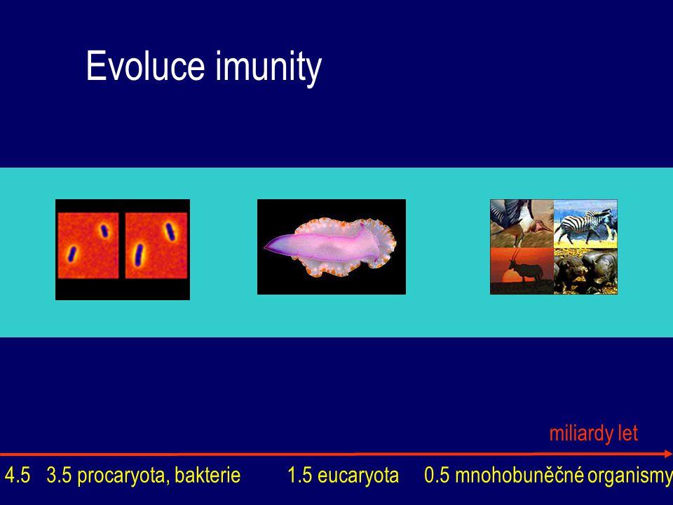 Evoluce imunity procaryota restrikční enzymy opbratlovci lymfatické tkáně a orgány histokompatibilní komplex u savců bezobratlí antimikrobiální látky lectiny, lysozym fagocytóza