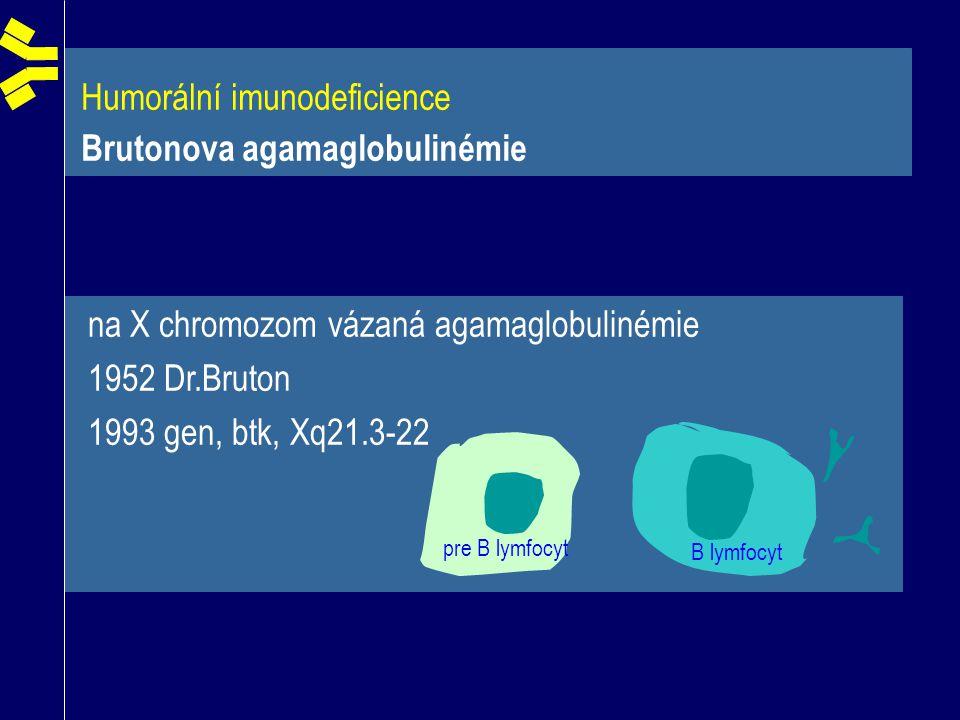 Humorální imunodeficience Brutonova agamaglobulinémie B lymfocyt pre B lymfocyt na X chromozom vázaná agamaglobulinémie 1952 Dr.Bruton 1993 gen, btk,