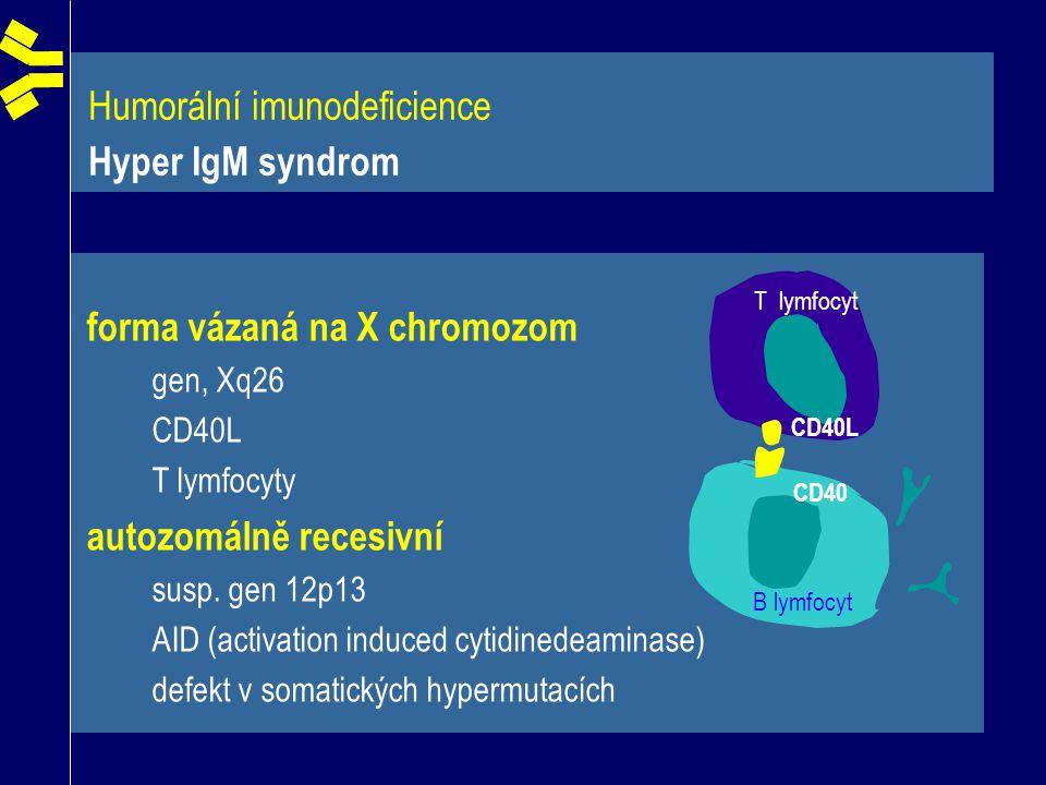 Humorální imunodeficience Hyper IgM syndrom B lymfocyt T lymfocyt CD40L CD40 forma vázaná na X chromozom gen, Xq26 CD40L T lymfocyty autozomálně reces