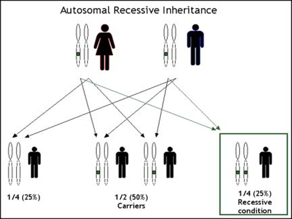 Srpkovitá anémie  nemoc je způsobena pozměněnou molekulou hemoglobinu: v šesté pozici β- globinového řetězce je místo kyseliny glutamové zařazen valin