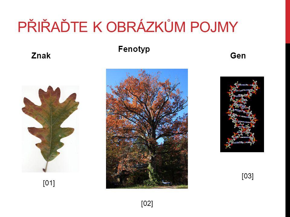 PŘIŘAĎTE K OBRÁZKŮM POJMY [01] [02] [03] Znak Fenotyp Gen