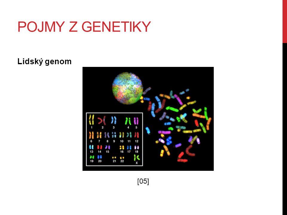 POJMY Z GENETIKY Lidský genom [05]