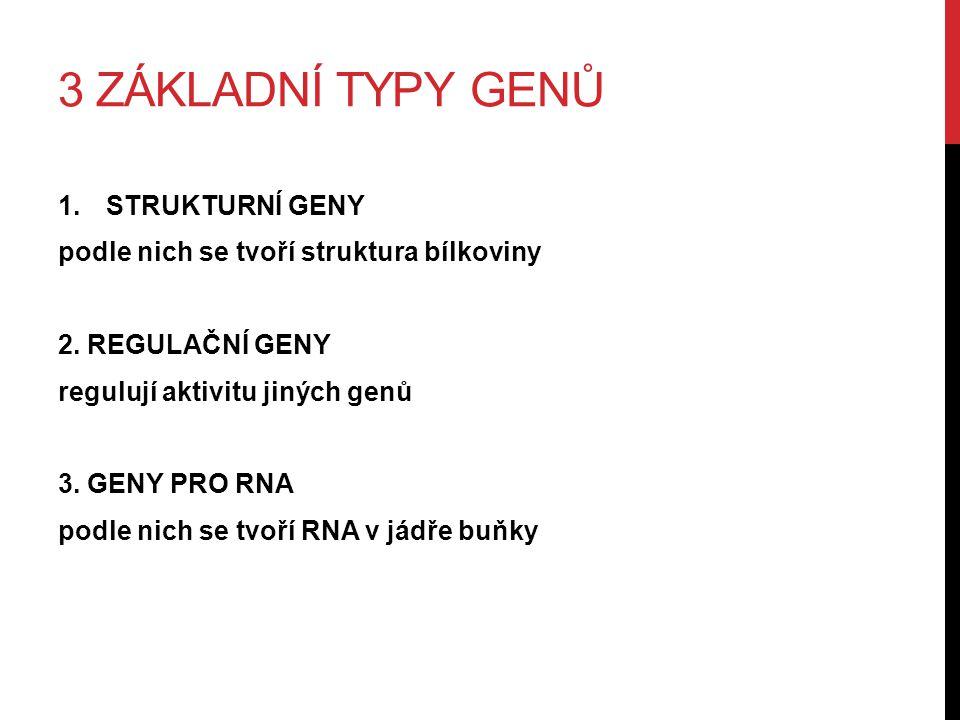 3 ZÁKLADNÍ TYPY GENŮ 1.STRUKTURNÍ GENY podle nich se tvoří struktura bílkoviny 2.