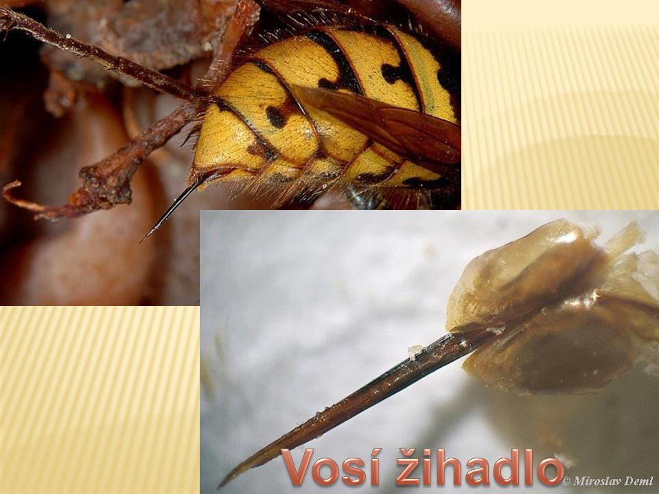 Pohled do komůrek, v nichž jsou nejmladší larvy.