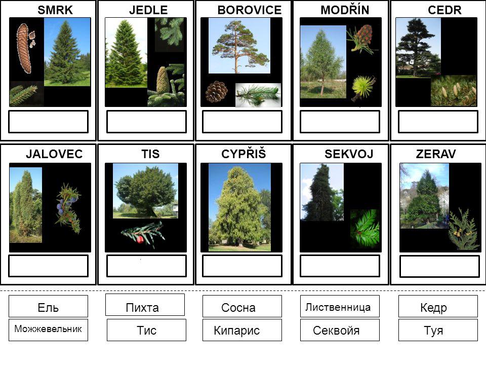 Citace obrazového materiálu: [cit.2010-16-01].