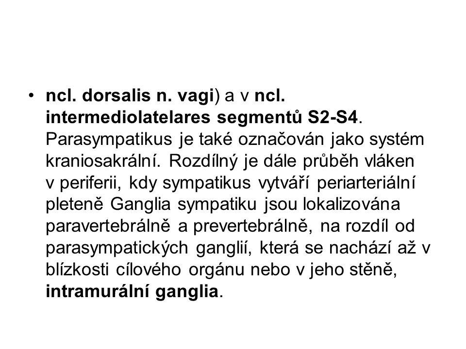 ncl. dorsalis n. vagi) a v ncl. intermediolatelares segmentů S2-S4. Parasympatikus je také označován jako systém kraniosakrální. Rozdílný je dále průb