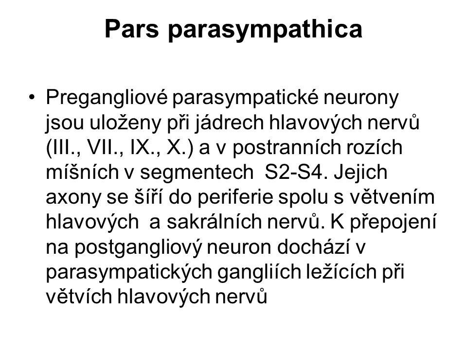 Pars parasympathica Pregangliové parasympatické neurony jsou uloženy při jádrech hlavových nervů (III., VII., IX., X.) a v postranních rozích míšních