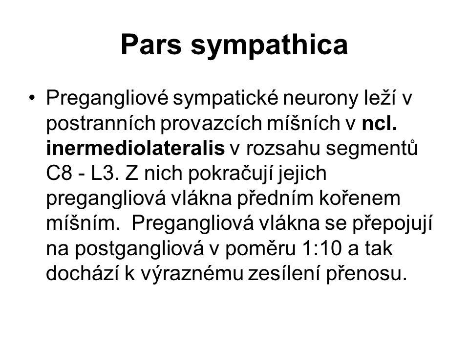 Pars sympathica Pregangliové sympatické neurony leží v postranních provazcích míšních v ncl. inermediolateralis v rozsahu segmentů C8 - L3. Z nich pok