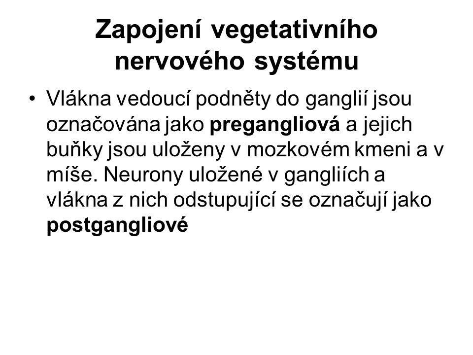 Zapojení vegetativního nervového systému Vlákna vedoucí podněty do ganglií jsou označována jako pregangliová a jejich buňky jsou uloženy v mozkovém km