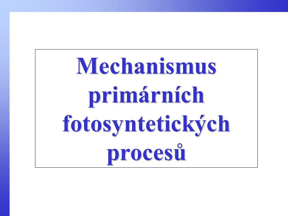 Mechanismus primárních fotosyntetických procesů