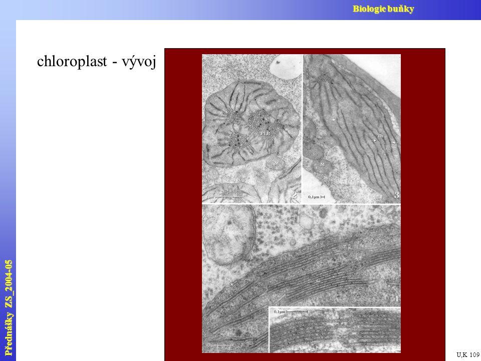 chloroplast - vývoj Přednášky ZS_2004-05 Biologie buňky U,K 109