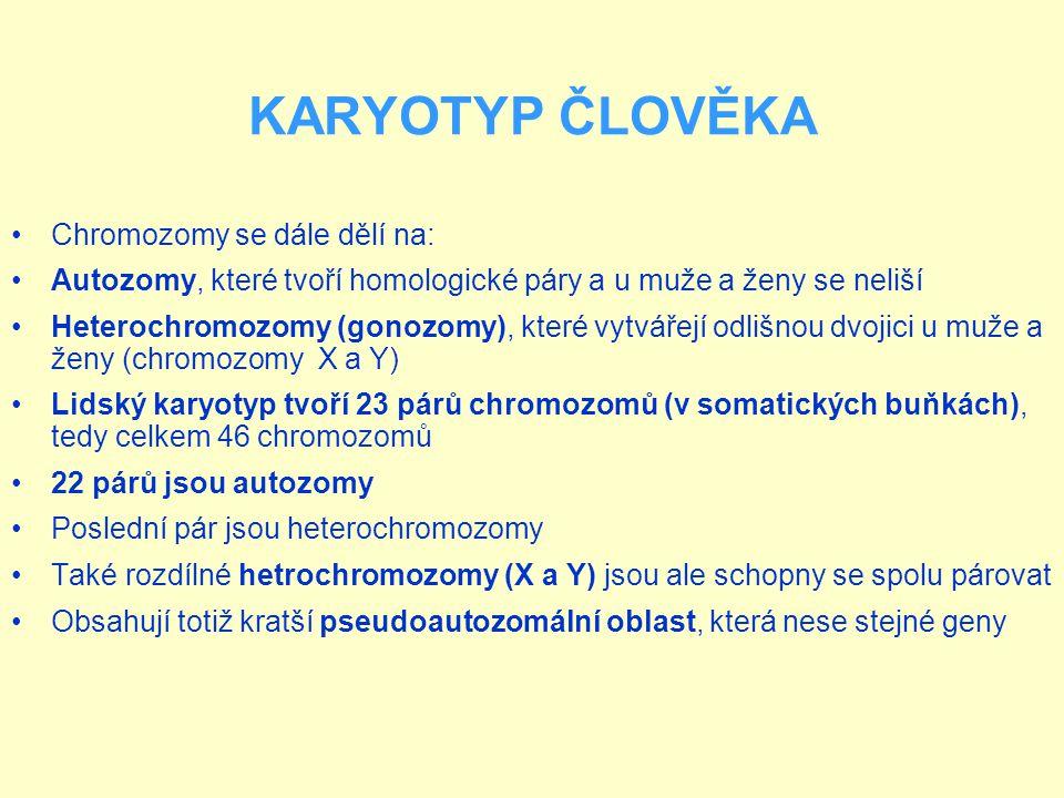 Chromozomy se dále dělí na: Autozomy, které tvoří homologické páry a u muže a ženy se neliší Heterochromozomy (gonozomy), které vytvářejí odlišnou dvojici u muže a ženy (chromozomy X a Y) Lidský karyotyp tvoří 23 párů chromozomů (v somatických buňkách), tedy celkem 46 chromozomů 22 párů jsou autozomy Poslední pár jsou heterochromozomy Také rozdílné hetrochromozomy (X a Y) jsou ale schopny se spolu párovat Obsahují totiž kratší pseudoautozomální oblast, která nese stejné geny KARYOTYP ČLOVĚKA