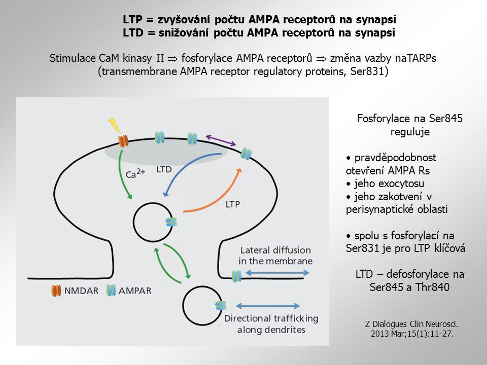 Stimulace CaM kinasy II  fosforylace AMPA receptorů  změna vazby naTARPs (transmembrane AMPA receptor regulatory proteins, Ser831) LTP = zvyšování p