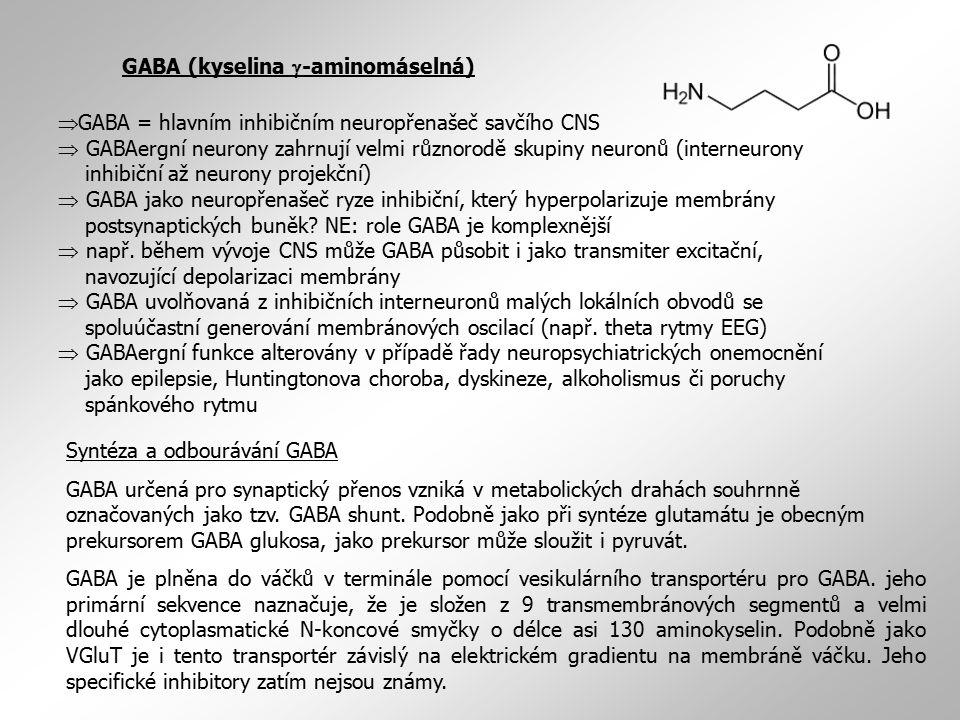 GABA (kyselina  -aminomáselná)  GABA = hlavním inhibičním neuropřenašeč savčího CNS  GABAergní neurony zahrnují velmi různorodě skupiny neuronů (in