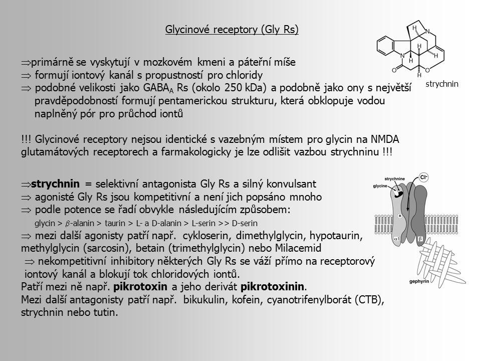Glycinové receptory (Gly Rs)  primárně se vyskytují v mozkovém kmeni a páteřní míše  formují iontový kanál s propustností pro chloridy  podobné vel