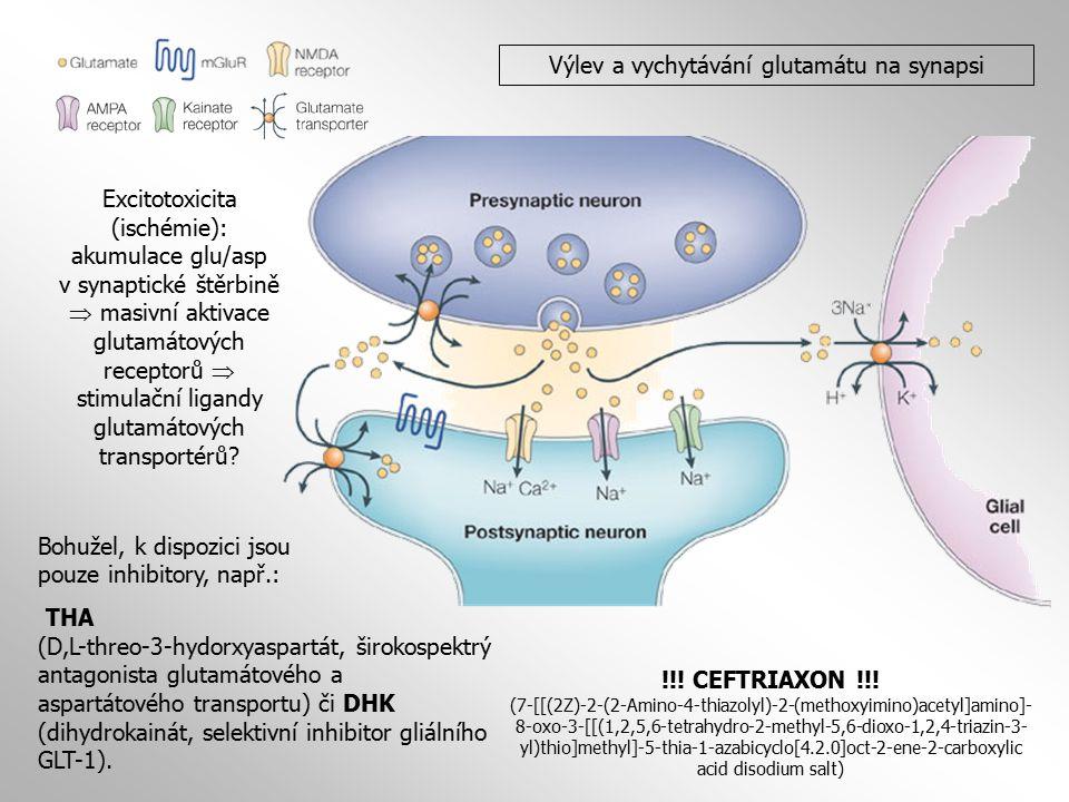 Výlev a vychytávání glutamátu na synapsi Excitotoxicita (ischémie): akumulace glu/asp v synaptické štěrbině  masivní aktivace glutamátových receptorů