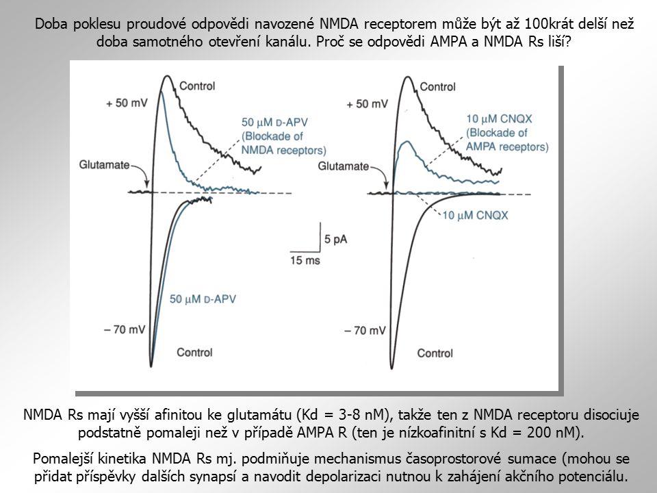 Doba poklesu proudové odpovědi navozené NMDA receptorem může být až 100krát delší než doba samotného otevření kanálu. Proč se odpovědi AMPA a NMDA Rs