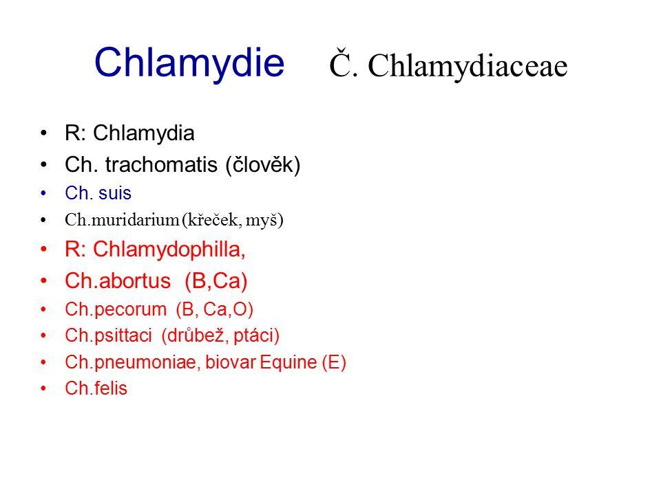 Chlamydie Č. Chlamydiaceae R: Chlamydia Ch. trachomatis (člověk) Ch. suis Ch.muridarium (křeček, myš) R: Chlamydophilla, Ch.abortus (B,Ca) Ch.pecorum
