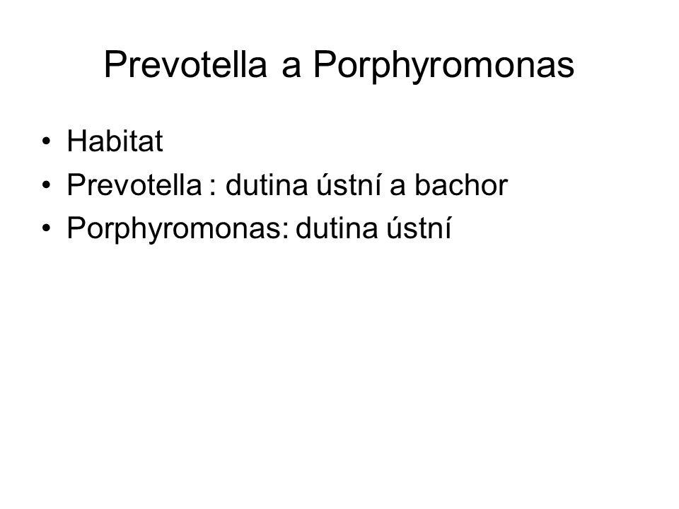 Prevotella a Porphyromonas Habitat Prevotella : dutina ústní a bachor Porphyromonas: dutina ústní