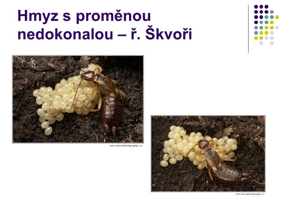 Hmyz s proměnou nedokonalou – ř. Škvoři