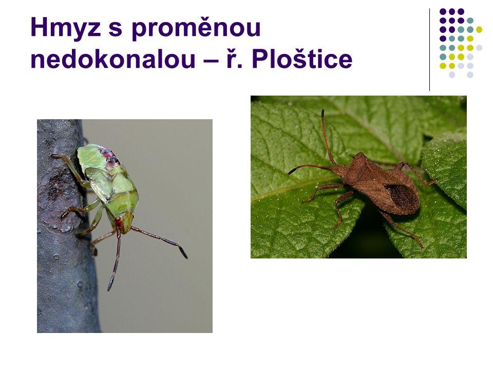 Hmyz s proměnou nedokonalou – ř. Ploštice