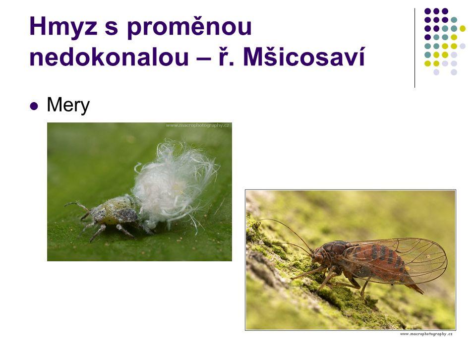 Hmyz s proměnou nedokonalou – ř. Mšicosaví Mery