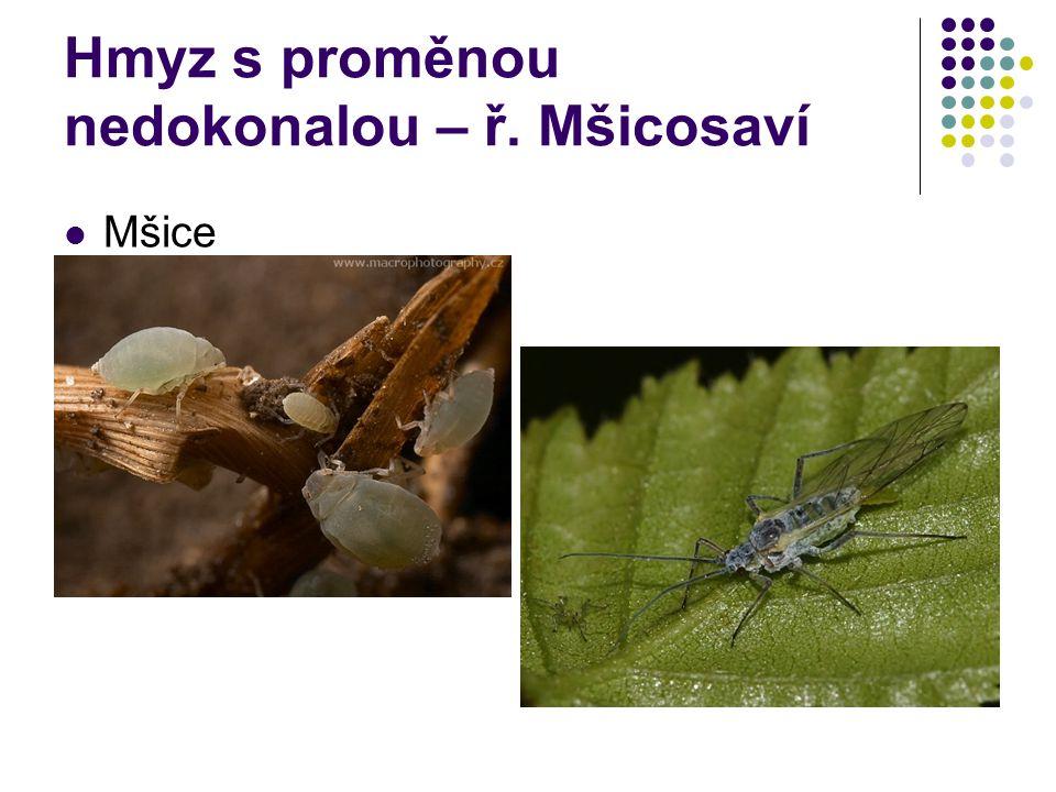 Hmyz s proměnou nedokonalou – ř. Mšicosaví Mšice