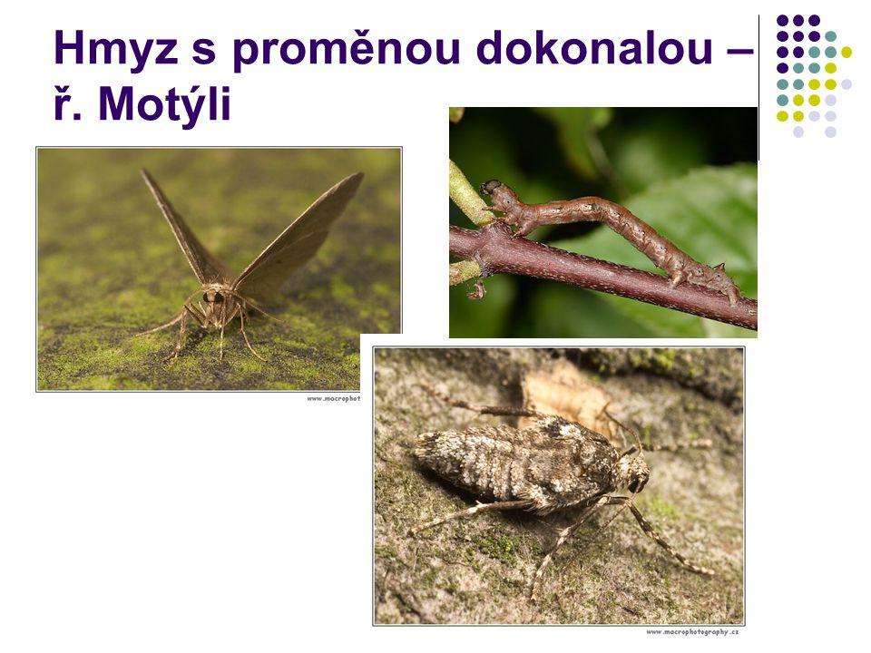 Hmyz s proměnou dokonalou – ř. Motýli